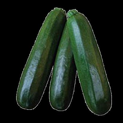 F1 Zucchini